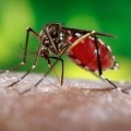 (Foto: James Gathany/Centers for Disease Control and Prevention)