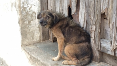Maltrato animal en Cuba: un demonio casi invencible